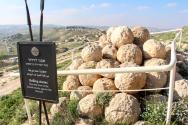 Herodyon rolling stones