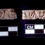Inscriptions from Umm el-Marra